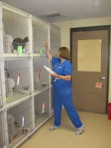 Observing cats in a shelter