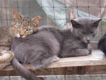 Cats awaiting rescue