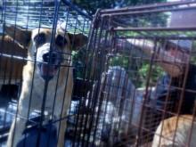 dog-awaiting-surgery